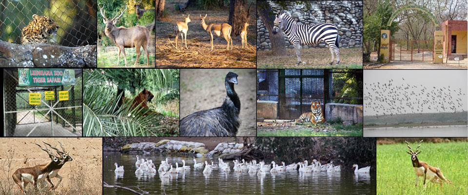 Wildlife Sanctuaries & Zoos